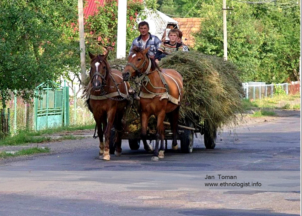 The man with horses in the Ukraine