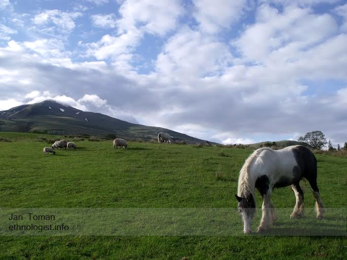 The animals of Tombreck farms with mountain of Ben Lawer. Photo: Jan Toman