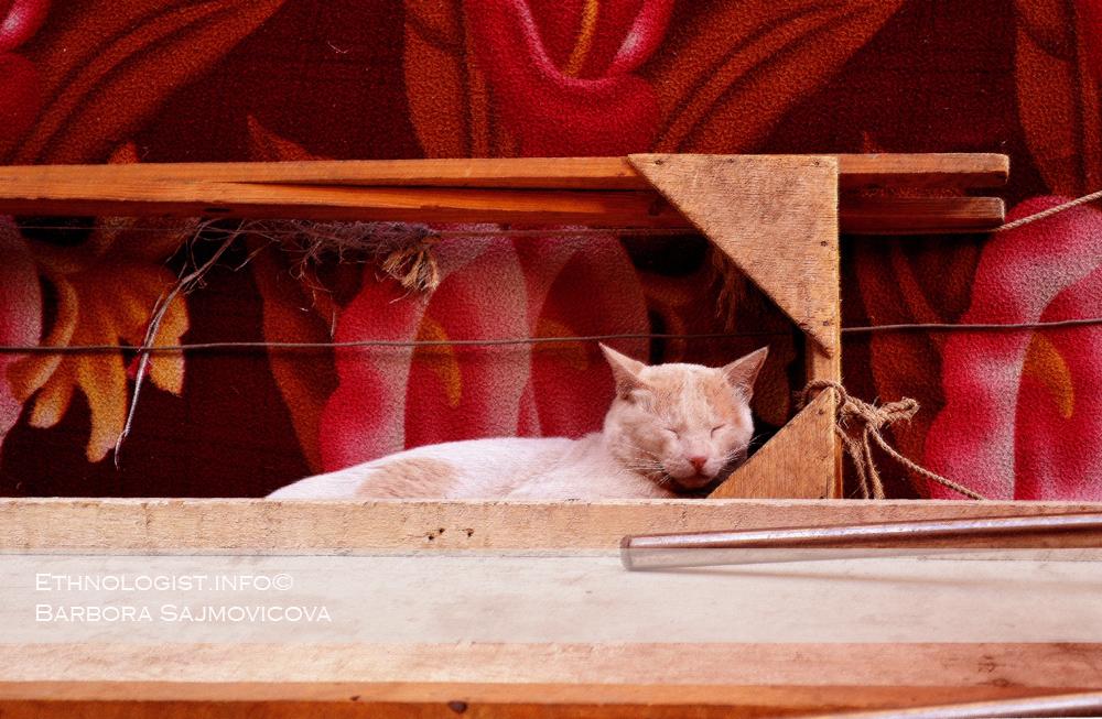 Spící kočka v Káhiře. Foto: Barbora Šajmovičová, 2011.