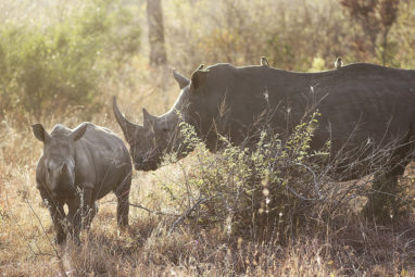 Mezinárodní den nosorožců 2017