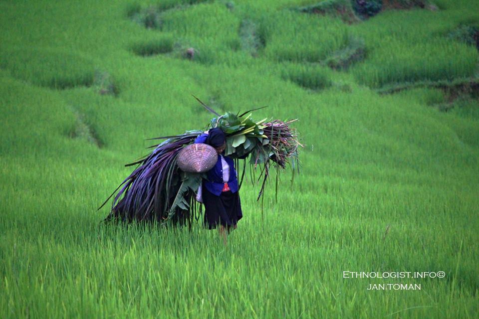Rýžoviště v Ha Giangu ve Vietnamu. Foto: Jan Toman